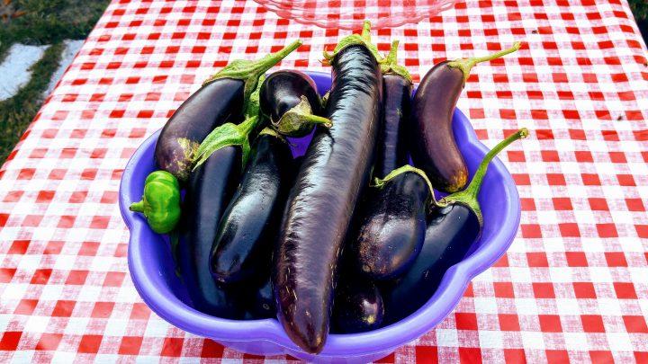Kışlık Yemeklik Patlıcan Kurusu Kurutması
