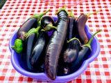 Yemeklik patlıcan kurusu Kurutma